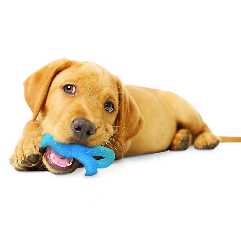 Nylabone Puppy Teething Dental Dino  Hellblau