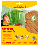 Catappa Leaves S