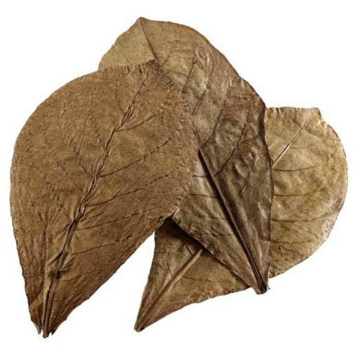 Hobby Nano Catappa Leaves, 12 pcs.