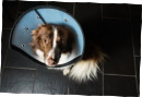 Elizabethan Collar Pet Airs with a Removable Pane XS