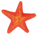 TrixieAssortment Starfish 12 Pcs Decorations