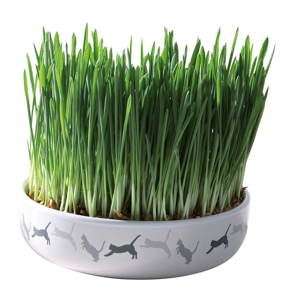 Trixie Ceramic Bowl with Cat Grass 50 g