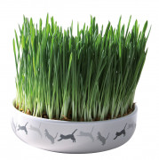 Ceramic Bowl with Cat Grass 50 g