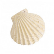 Europet-Bernina Aqua Della Scallop Shell, white White