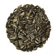 Ruvo Striped Sunflower Seeds 20 kg