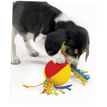 Petstages Puppy Cool Teether  Test und Raiting