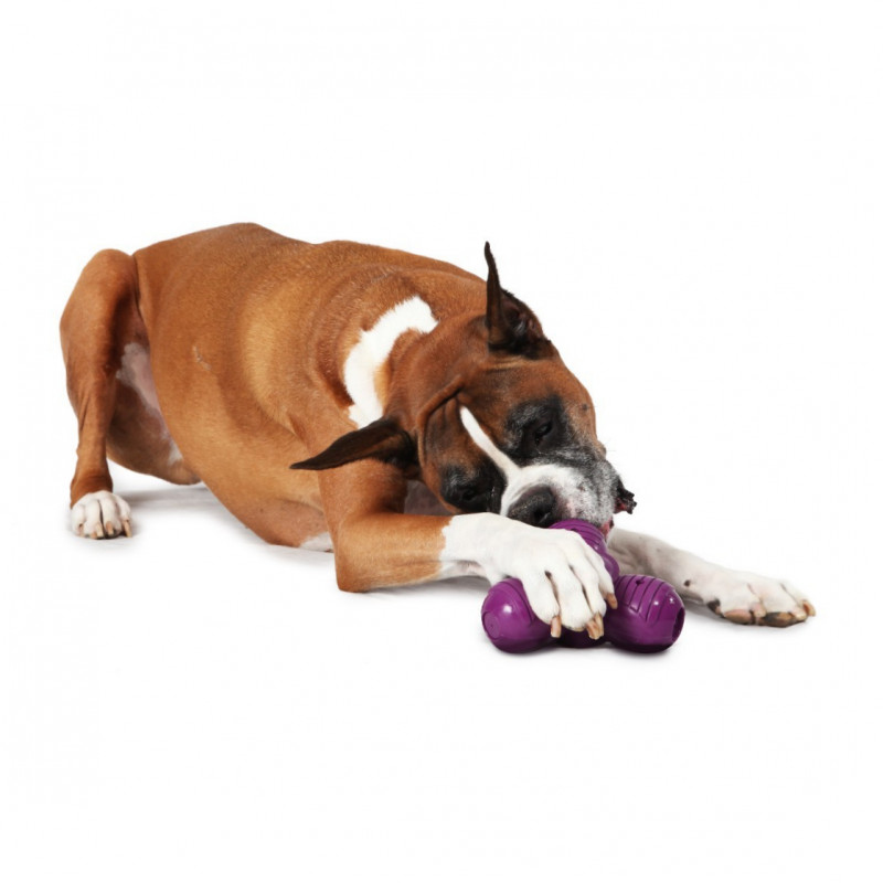 PetSafe Busy Buddy Squeak 'n Treat Troog  Troog  S