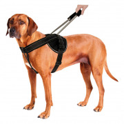 Harness with integrated Leash Jockey L